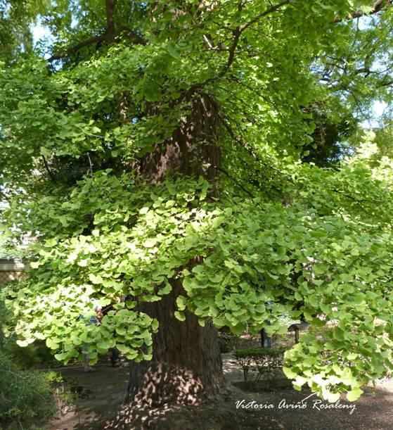 En el jard n bot nico de la universidad de valencia el for Arboles del jardin botanico