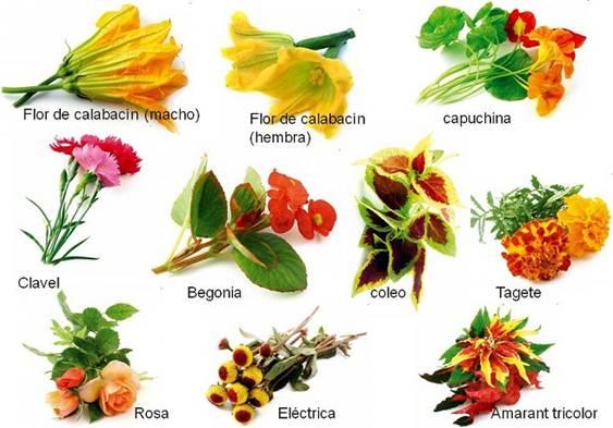 Cocinar con flores la fragancia en el plato el blog de - Flores para cocinar ...