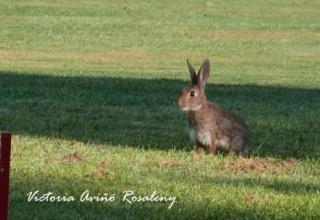 El conill i la llebre