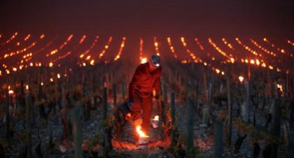 Al rescate de los vinos de borgoña